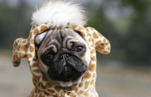 25 Ridiculously Funny Costumes A Dog Can Ever Have (7)