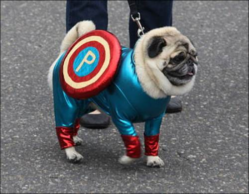 25 Ridiculously Funny Costumes A Dog Can Ever Have (8)