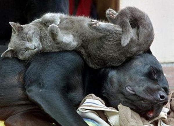 27 Cats Sleeping in Weird Places and Bizarre Positions (12)