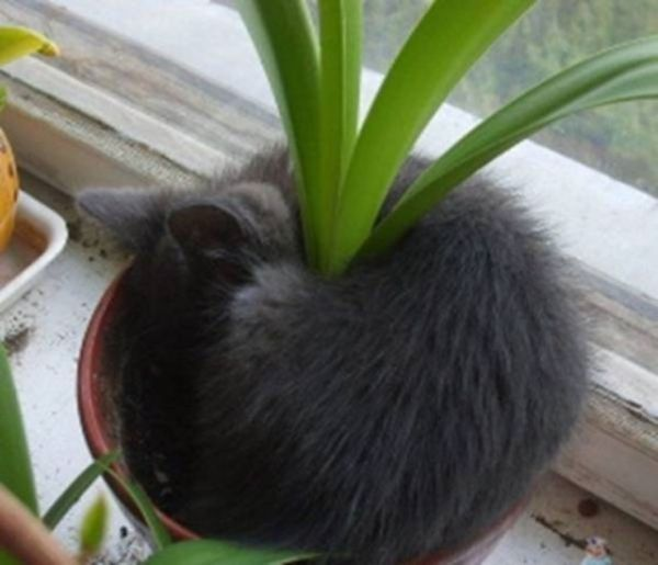 27 Cats Sleeping in Weird Places and Bizarre Positions (13)
