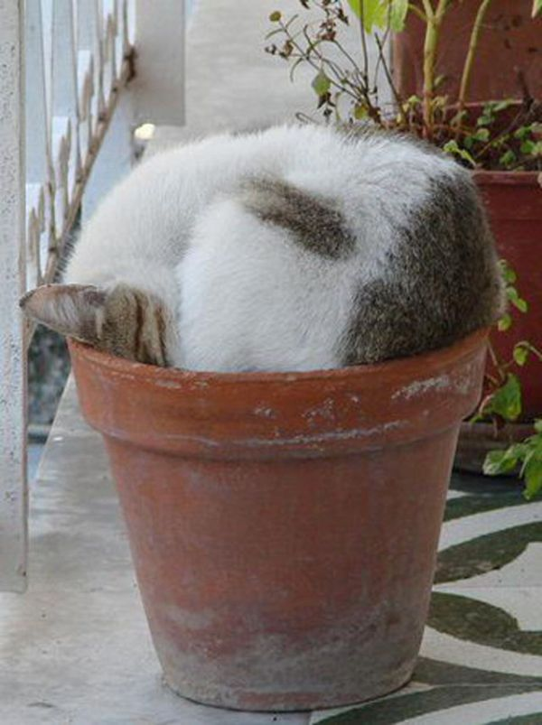 27 Cats Sleeping in Weird Places and Bizarre Positions (14)