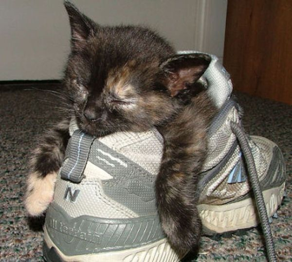 27 Cats Sleeping in Weird Places and Bizarre Positions (16)