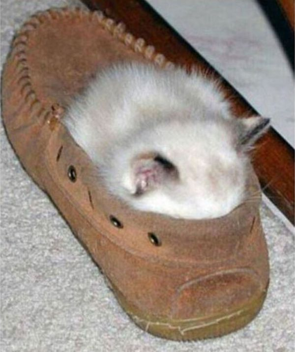 27 Cats Sleeping in Weird Places and Bizarre Positions (17)