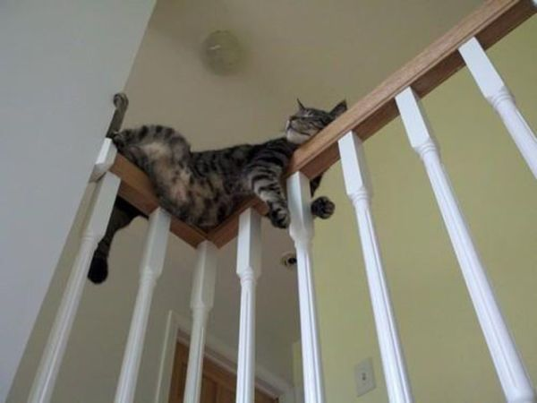 27 Cats Sleeping in Weird Places and Bizarre Positions (19)