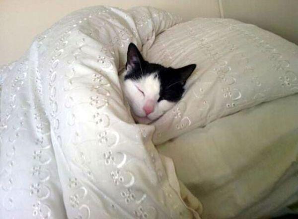 Dogs Like Sleeping On Bed