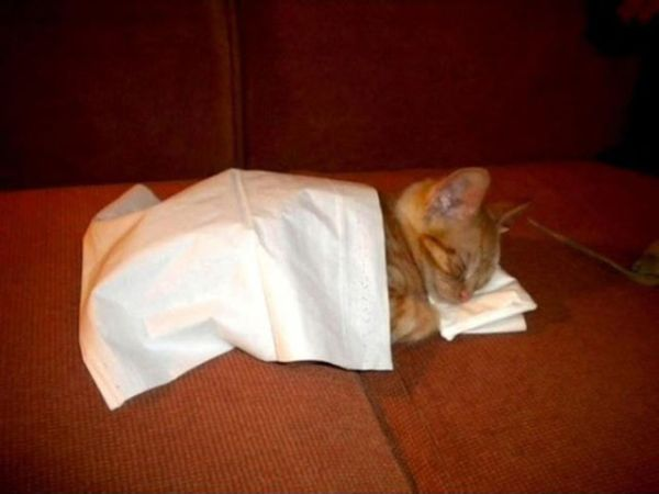 27 Cats Sleeping in Weird Places and Bizarre Positions (21)