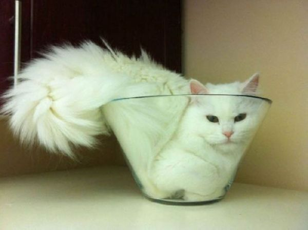 27 Cats Sleeping in Weird Places and Bizarre Positions (4)