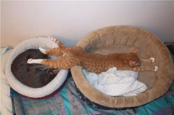27 Cats Sleeping in Weird Places and Bizarre Positions (6)