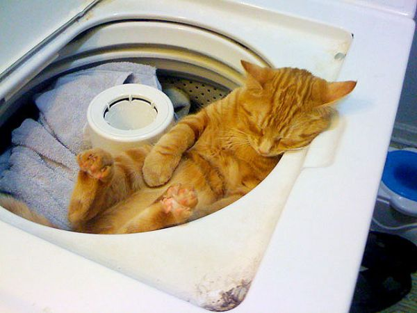 27 Cats Sleeping in Weird Places and Bizarre Positions (7)