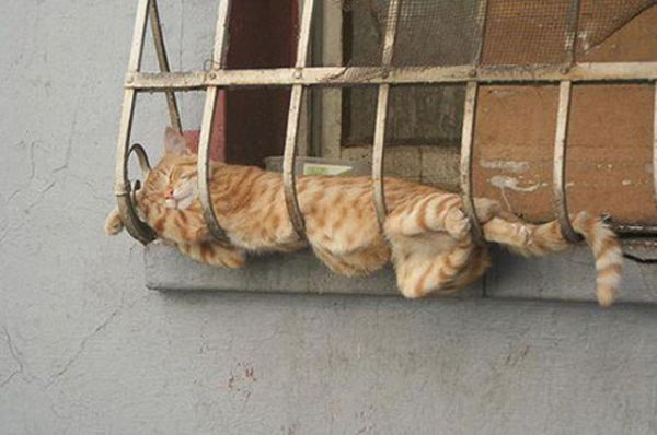 27 Cats Sleeping in Weird Places and Bizarre Positions (9)