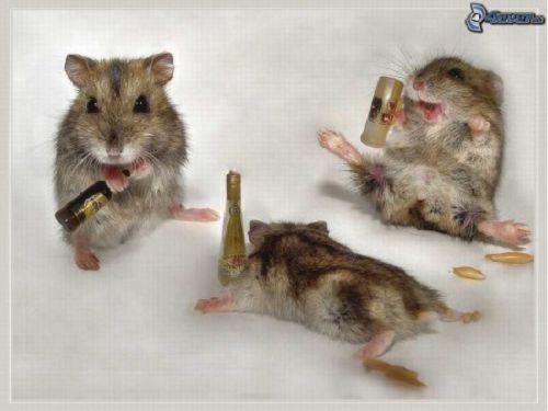 Craziest Drunk Animals (1)