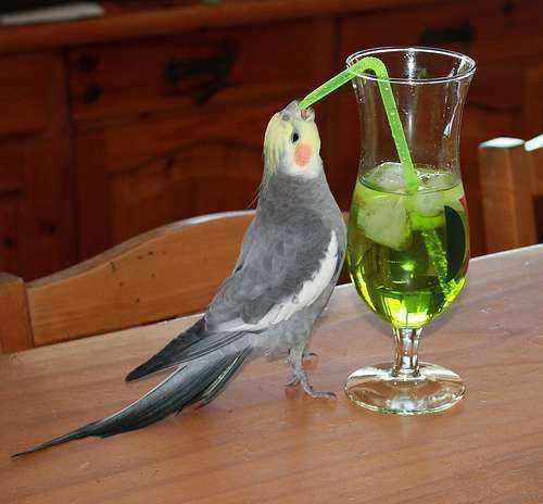 Craziest Drunk Animals (10)