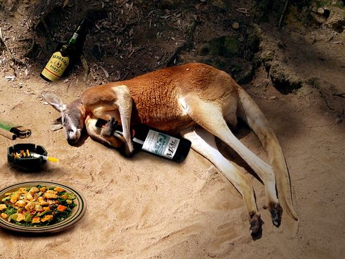 Craziest Drunk Animals (11)
