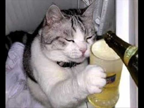 Craziest Drunk Animals (15)