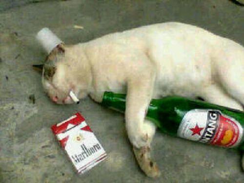 Craziest Drunk Animals (16)