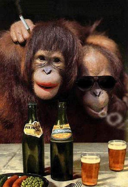 Craziest Drunk Animals (2)