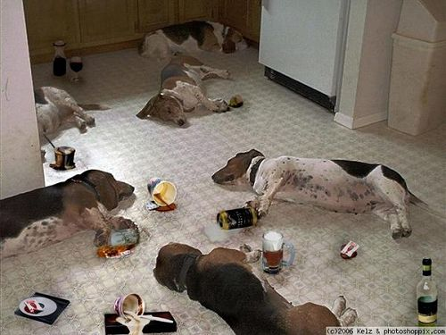 Craziest Drunk Animals (21)
