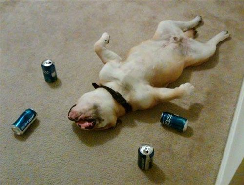 Craziest Drunk Animals (24)