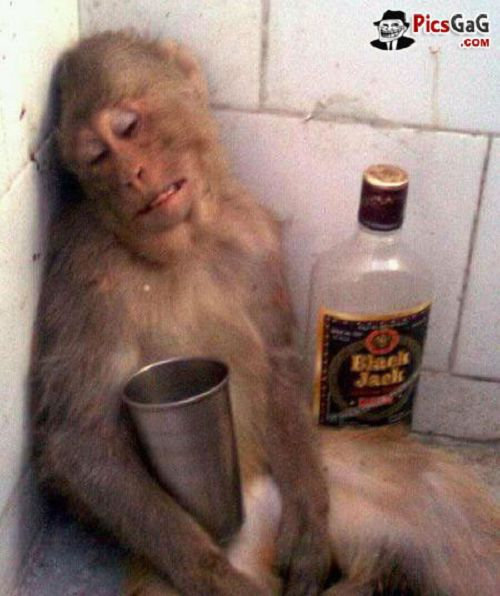 Craziest Drunk Animals (3)