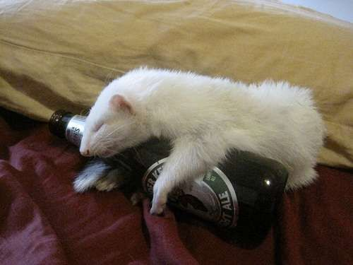 Craziest Drunk Animals (5)