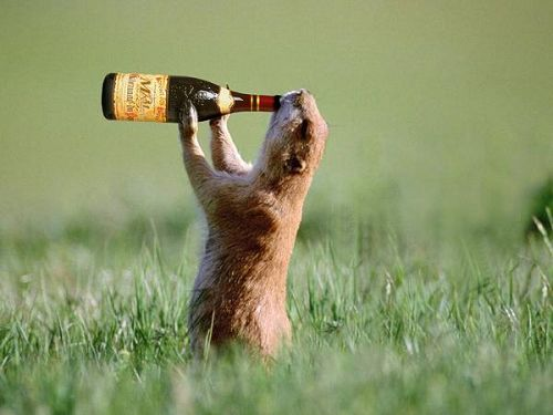 Craziest Drunk Animals (6)