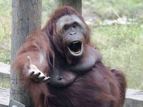 Hillarious Images Of Animals Acting Funny (16)