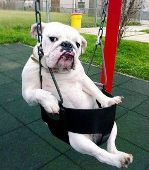 Hillarious Images Of Animals Acting Funny (4)