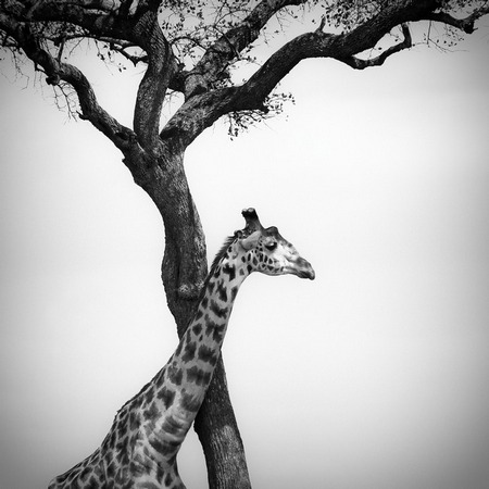 Terrific Black and White Photographs (9)