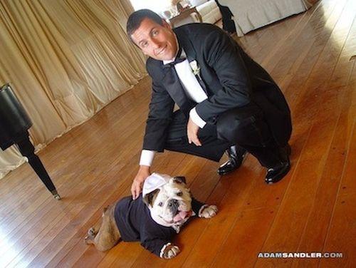 Adam Sandler's bulldog - Meatball